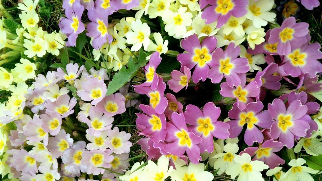 Spring_flower_power_Zala_Zagoricnik_6