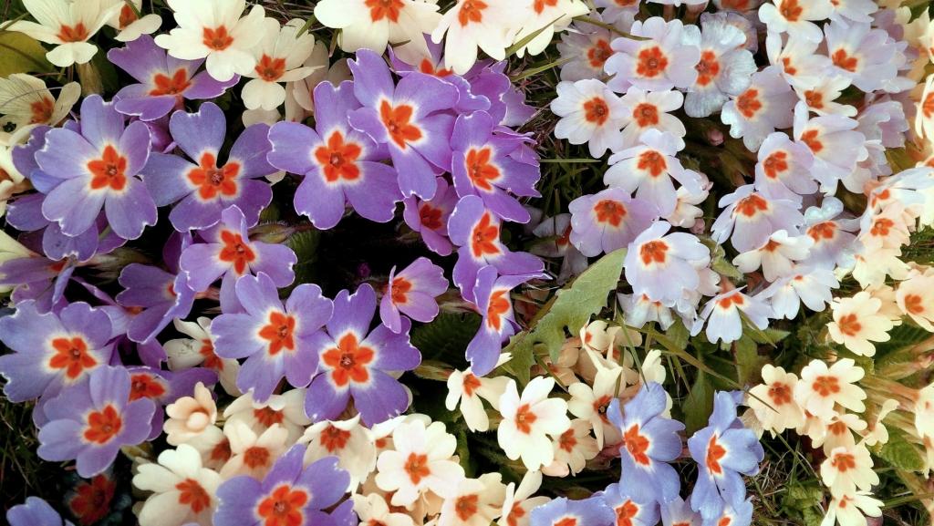 Spring_flower_power_Zala_Zagoricnik_9