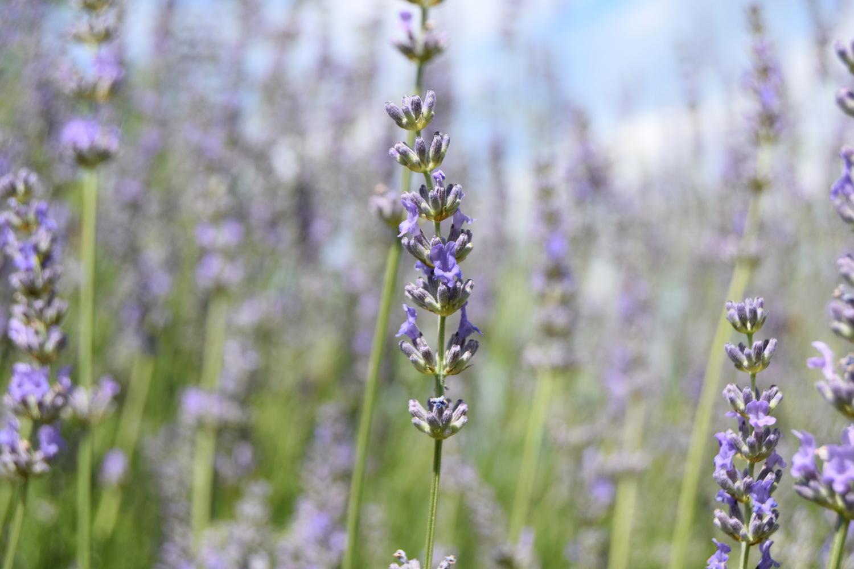 Woven_lavender_wands_diy_zalabell_6