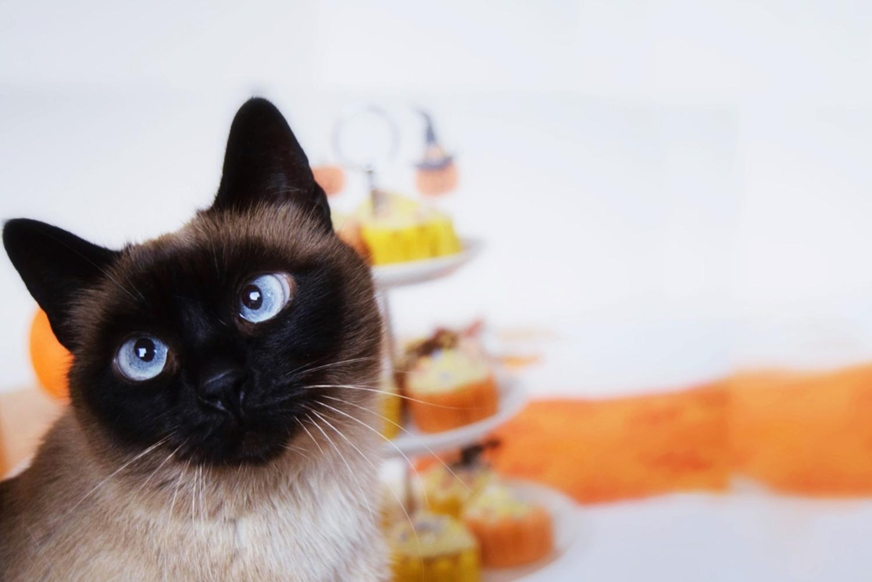 halloween_cupcakes_pumpkin_goji_party_zalabell_recipe_14
