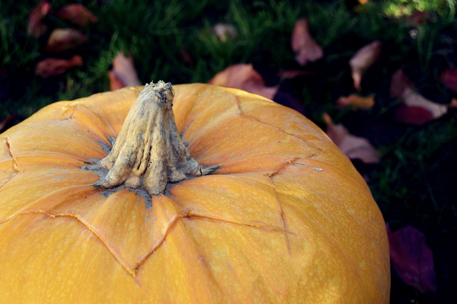 zalabell_happy_halloween_craving_pumpkins_1
