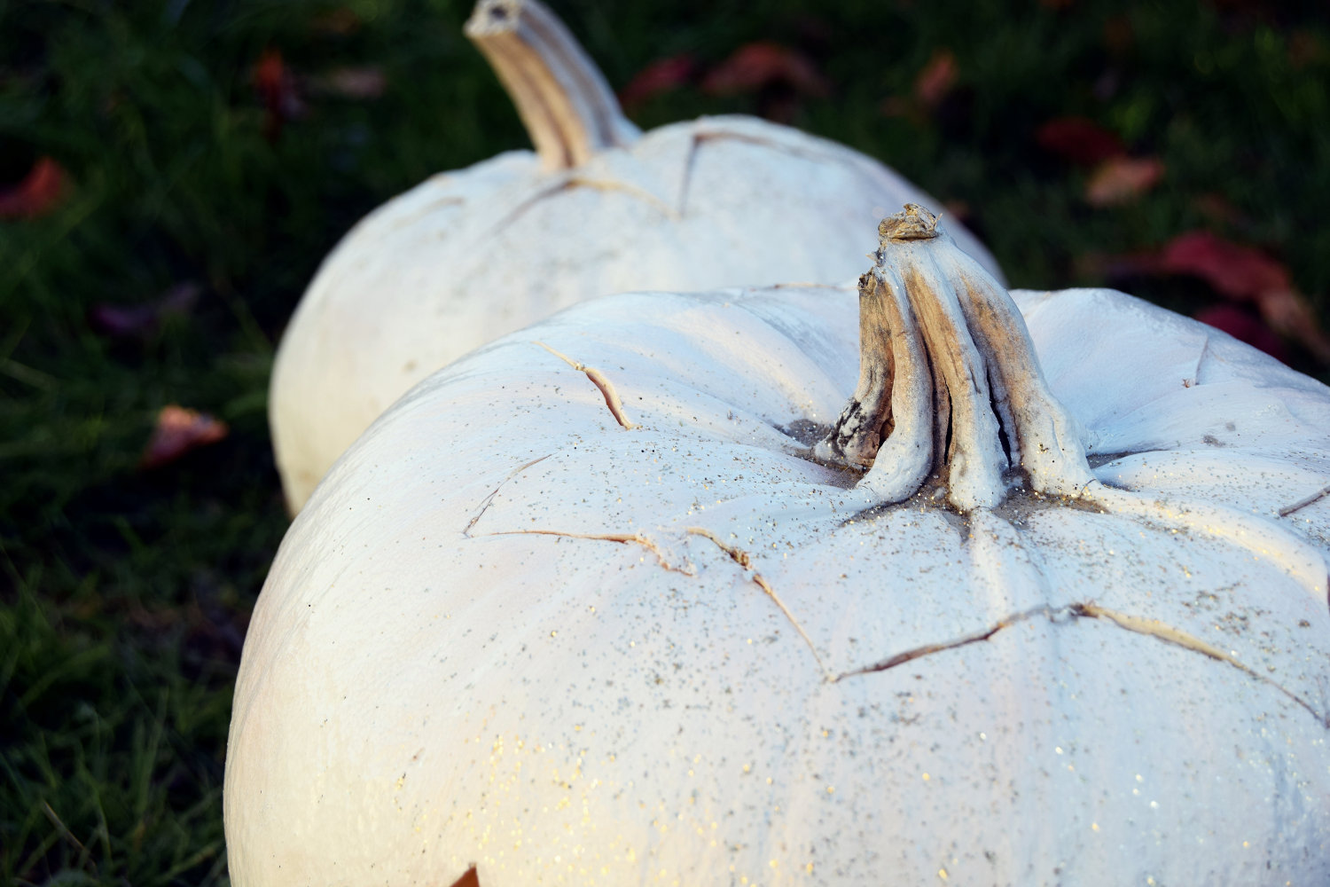 zalabell_happy_halloween_craving_pumpkins_13