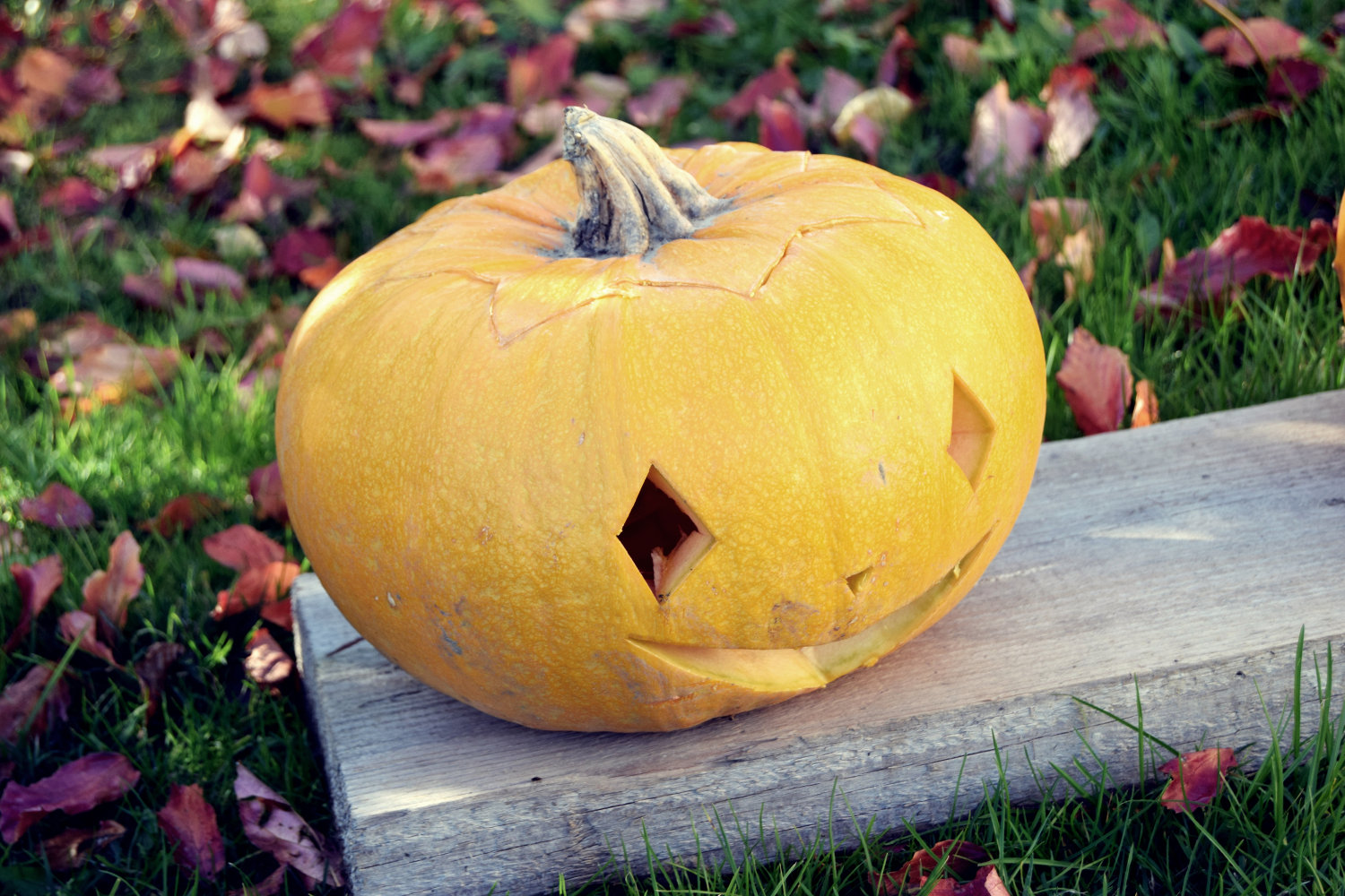 zalabell_happy_halloween_craving_pumpkins_3