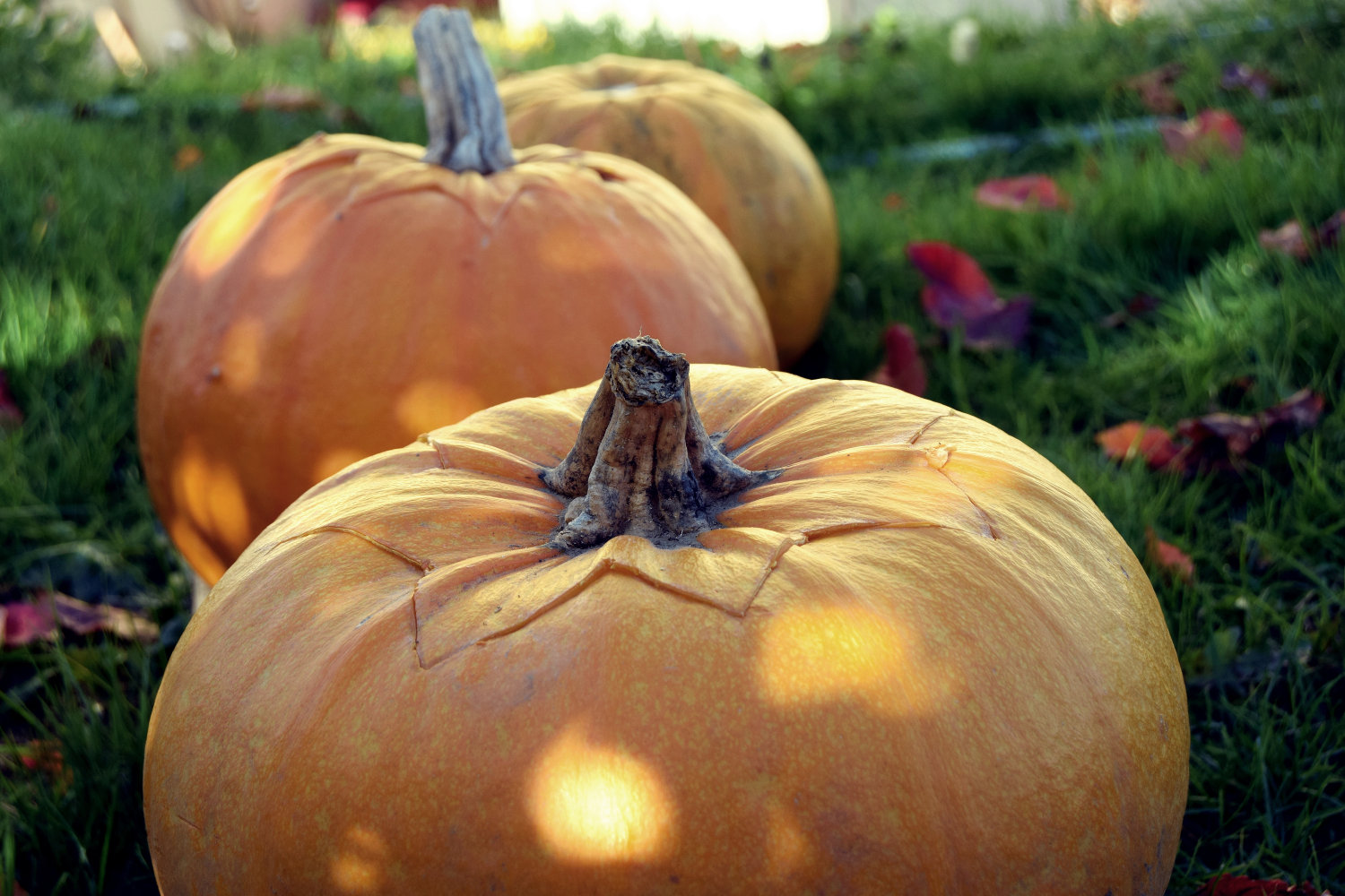 zalabell_happy_halloween_craving_pumpkins_5