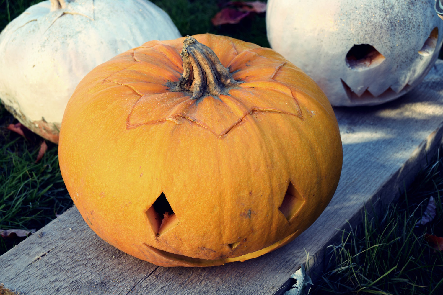 zalabell_happy_halloween_craving_pumpkins_8